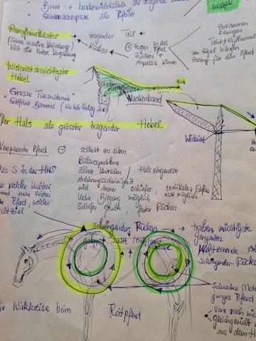 Theoriekurs reiten anatomisch richtig und pferdegerecht for Exterieur beurteilung pferd
